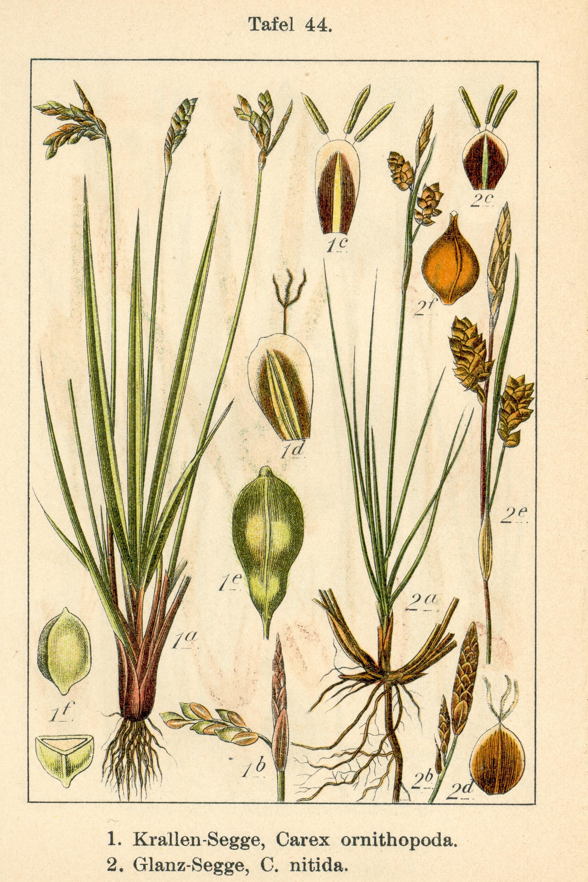 deutschlands flora in abbildungen 1796. Black Bedroom Furniture Sets. Home Design Ideas