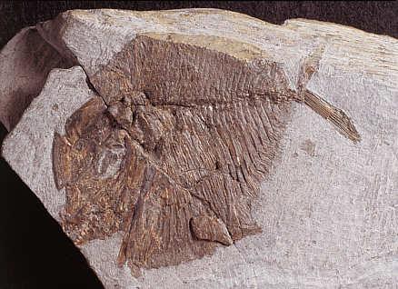 Neueste Archäologische Funde